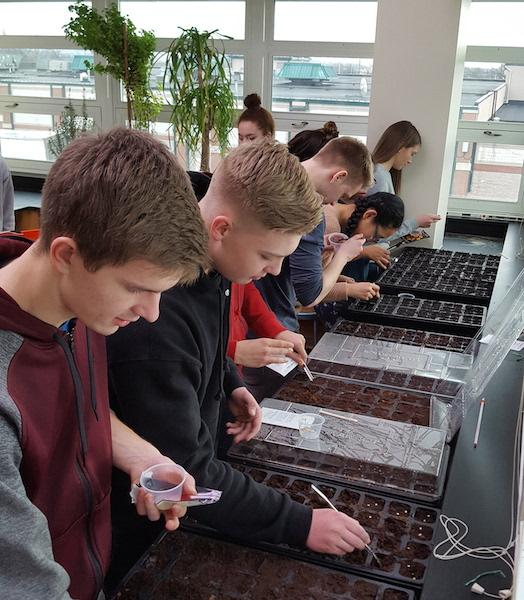 Students participating in the new club are planting tomatoes, basil and flowers.