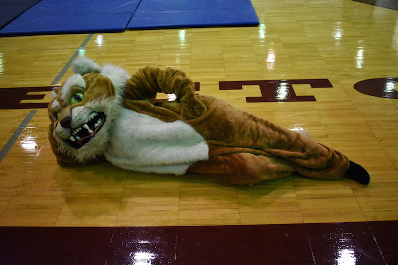 The+Becton+Wildcat+puts+on+a+performance+during+the+fall+pep+rally.