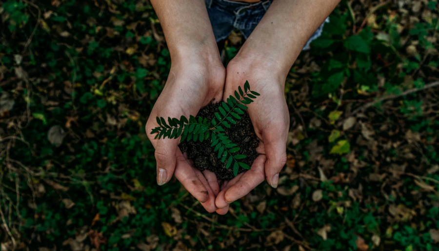 "Noah Buscher's ""Earth and I"" illustrates a clear message about working to improve the environment and our ecosystems. Depicting this image of a plant being grown in the hands of a person, it sheds light on the hope that if we change our ways and contribute to a sustainable lifestyle we can improve the planet's health."